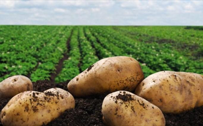 patates-ofelimes-blaberes-paxuntikes-i-oxi-oxi.jpg