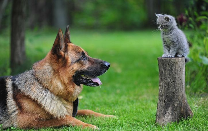 dog-cat (1).jpg