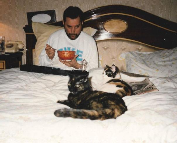 freddie-mercury-cats-5c6fb47c3567a-605.jpg