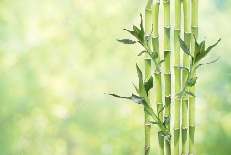 depositphotos_127050610-stock-photo-lucky-bamboo-on-natural-background.jpg