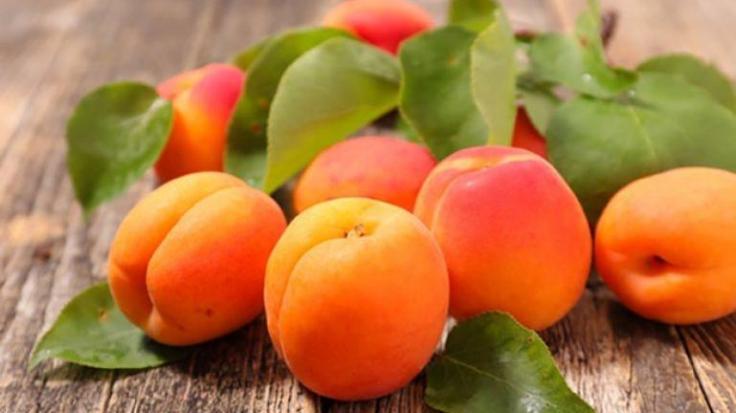 apricot_giannitsopoulou