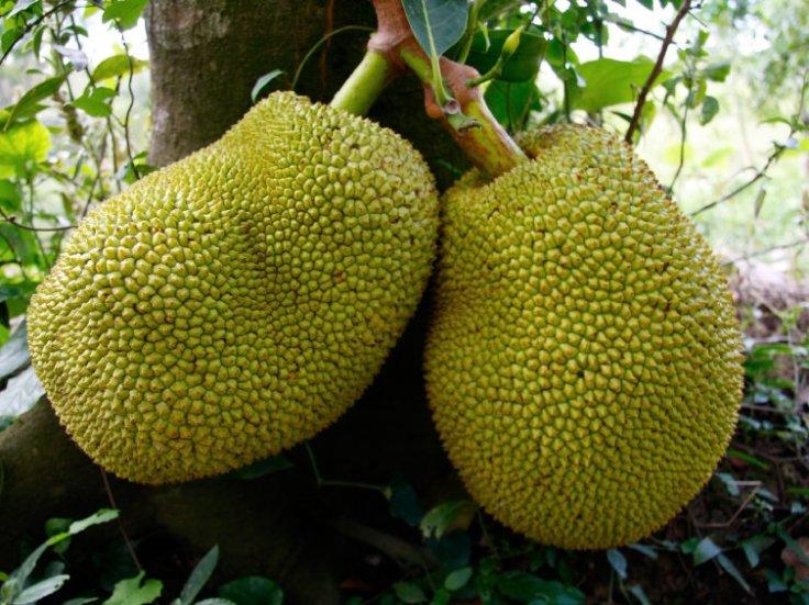 jackfruit-9672612823dce73bcdae08b37a708d8692d248d5-s800-c85.jpg