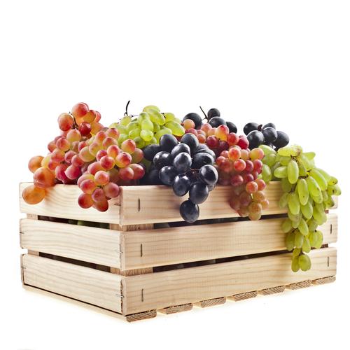 grape_112430948