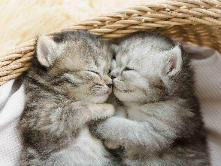 kittens-book-list-4-3.jpg