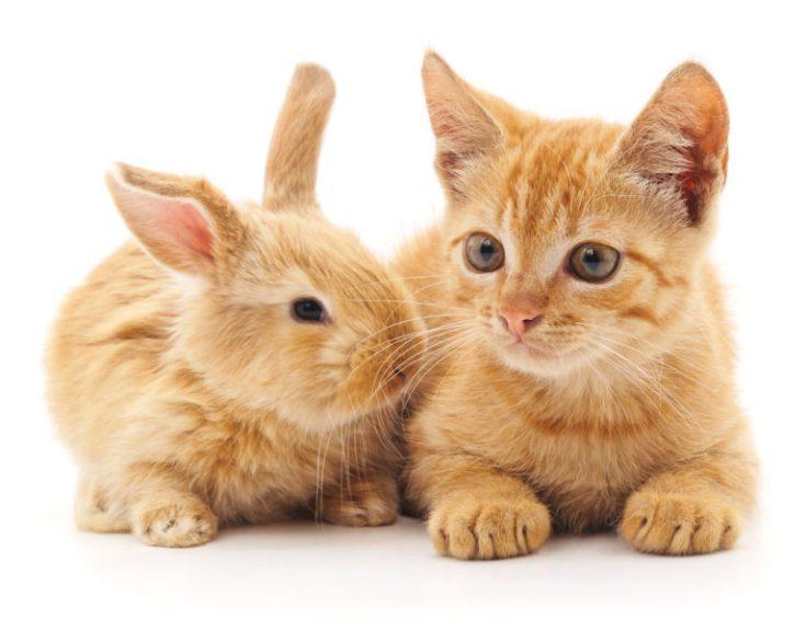 Γάτες-και-μικρά-ζώα-768x612